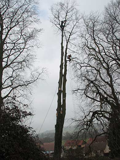 démontage abattage arbre